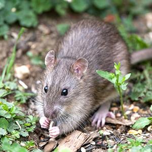 Mousephoto