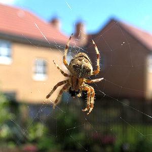 Spiderphoto