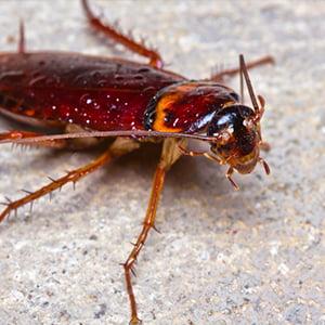 Cockroachphoto