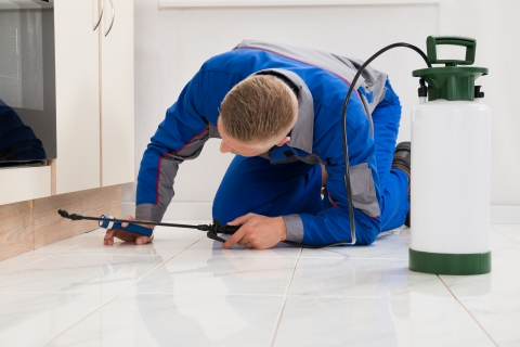 pest control in Jupiter Florida