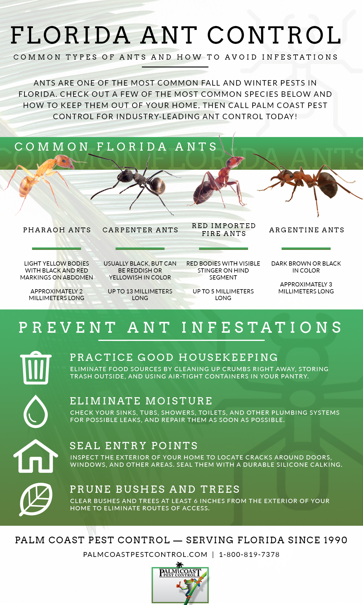 Ant Control Tips for Fall and Winter - Pest Control Jupiter | Termite  Control Florida | Lawn Care 33469 - Palm Coast Pest Control