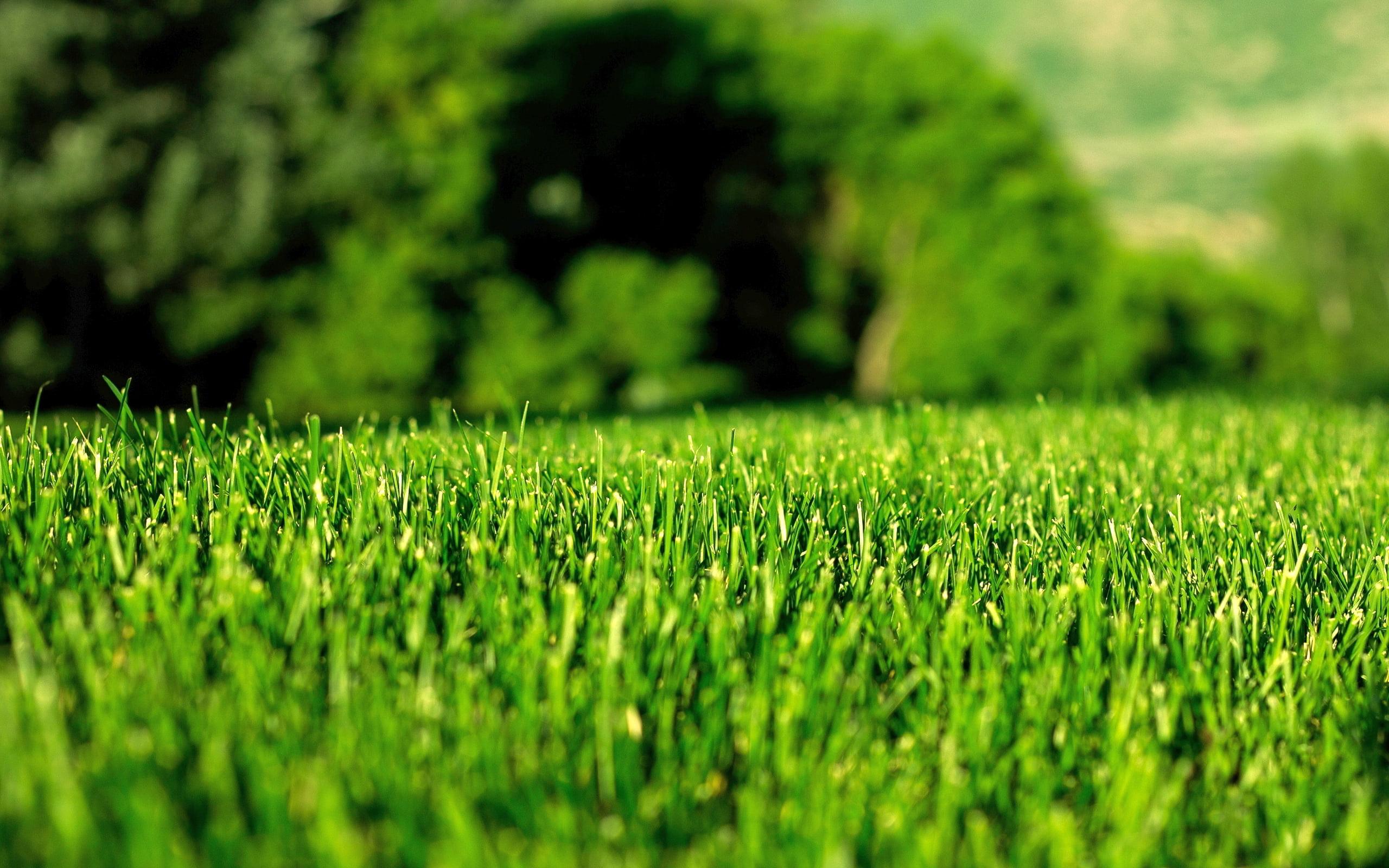 Blog Lawn Care